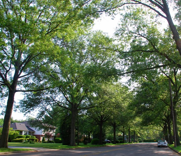 A tree canopied street in Garden City, New York (Long Island)